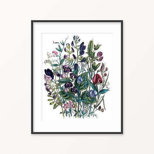 Vintage Botanical Print - 76