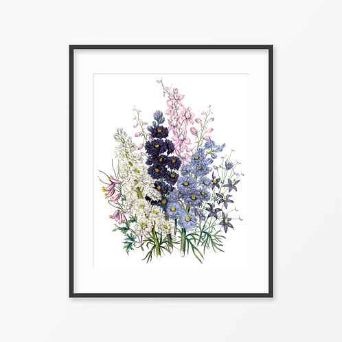 Vintage Botanical Print - 57