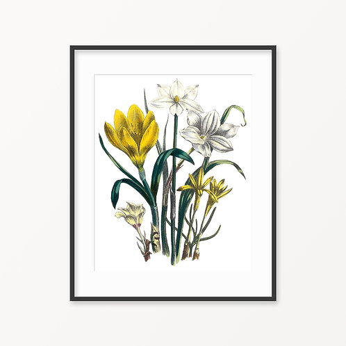 Vintage Botanical Print - 26