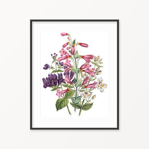 Vintage Botanical Print - 184