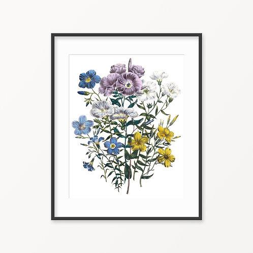 Vintage Botanical Print - 127