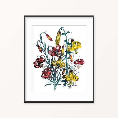 Vintage Botanical Print - 55