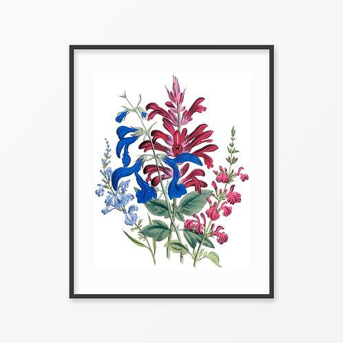 Vintage Botanical Print - 186