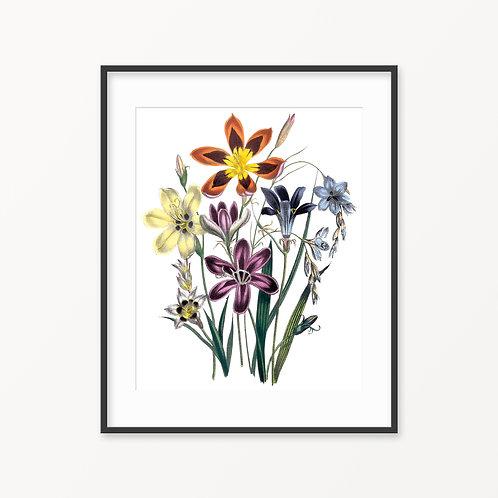 Vintage Botanical Print - 15