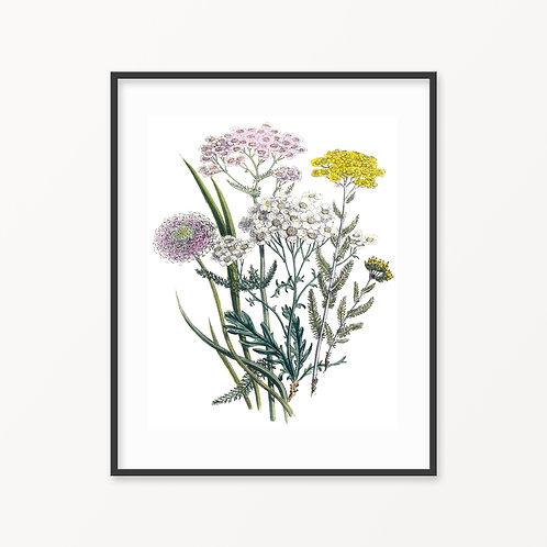 Vintage Botanical Print - 150