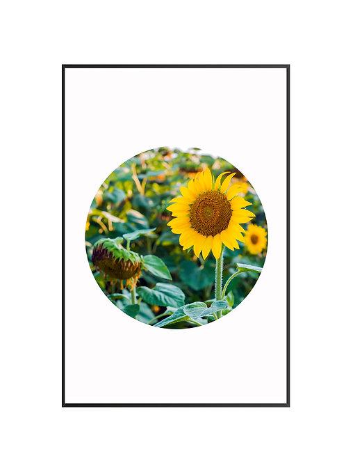 Sun Flowers Circle Print M13