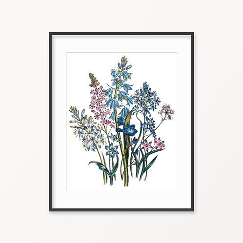 Vintage Botanical Print - 44