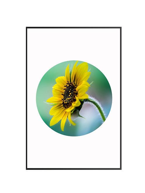 Sun Flower Circle Print M16