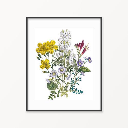 Vintage Botanical Print - 170