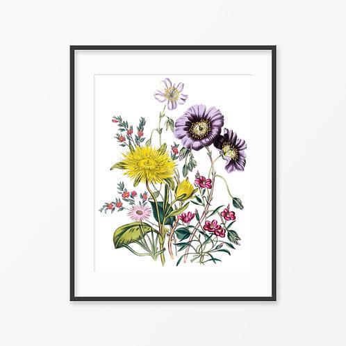 Vintage Botanical Print - 71