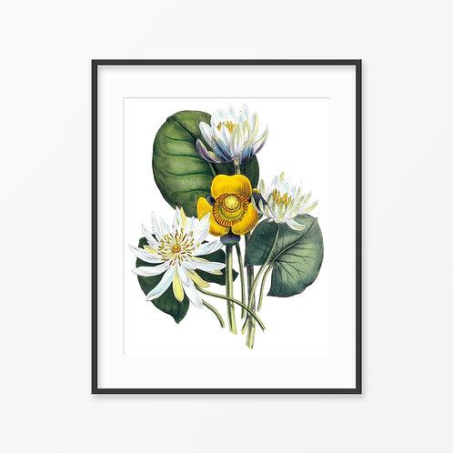 Vintage Botanical Print - 114