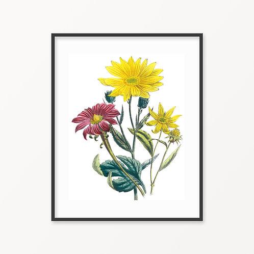 Vintage Botanical Print - 149