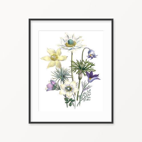 Vintage Botanical Print - 101