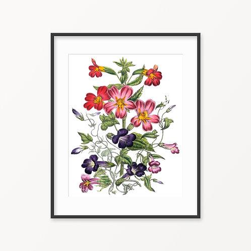 Vintage Botanical Print - 93