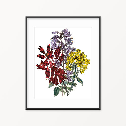 Vintage Botanical Print - 133
