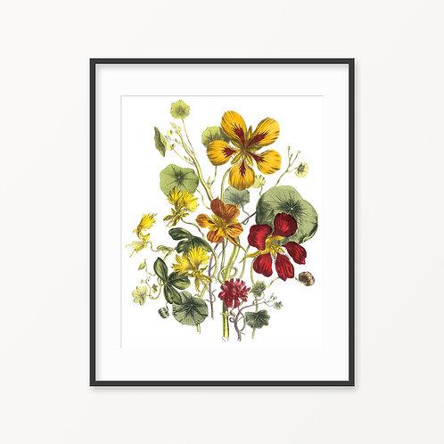 Vintage Botanical Print - 74