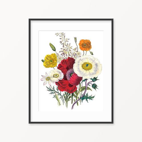 Vintage Botanical Print - 115