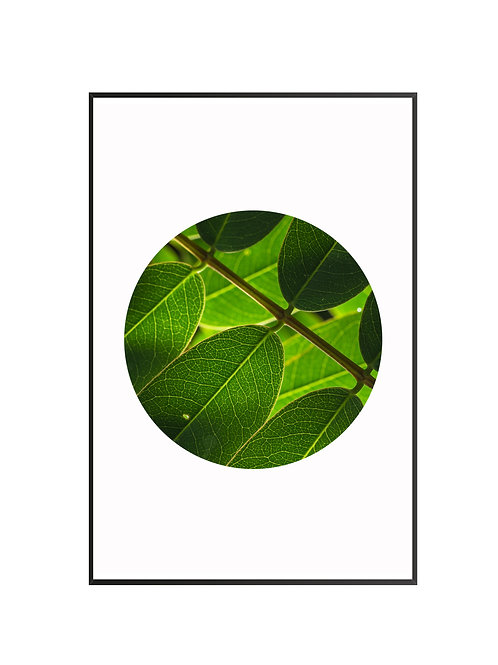 Green Leaves Cicle Print M2