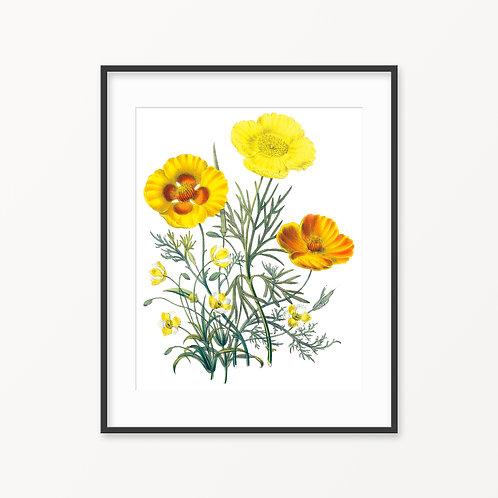 Vintage Botanical Print - 60