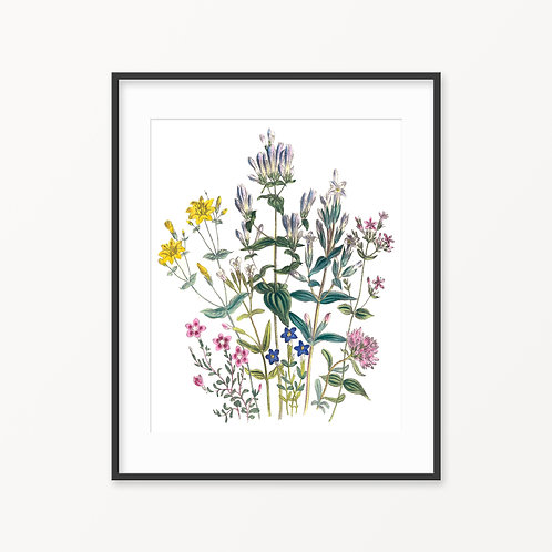 Vintage Botanical Print - 100