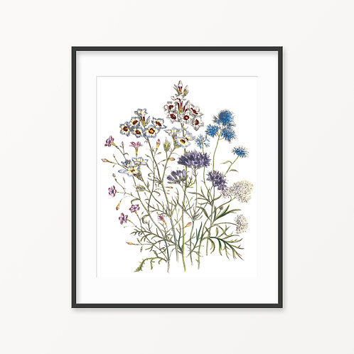 Vintage Botanical Print - 80