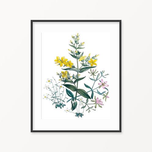 Vintage Botanical Print - 169