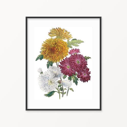 Vintage Botanical Print - 152