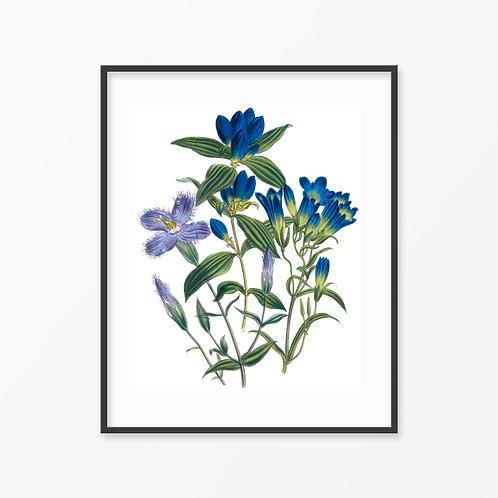 Vintage Botanical Print - 168