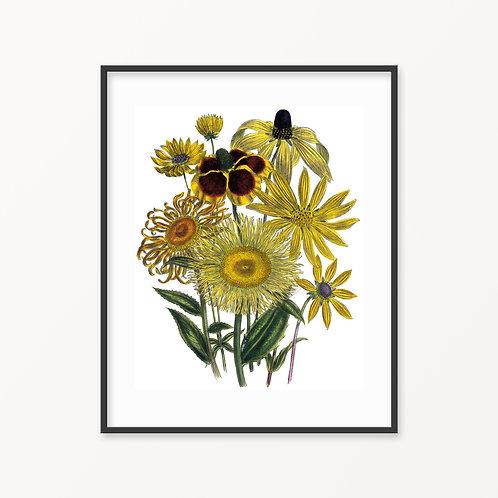 Vintage Botanical Print - 144
