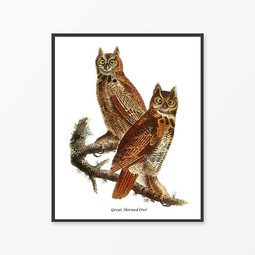 Great Horned Owl Hand Drawn illustration
