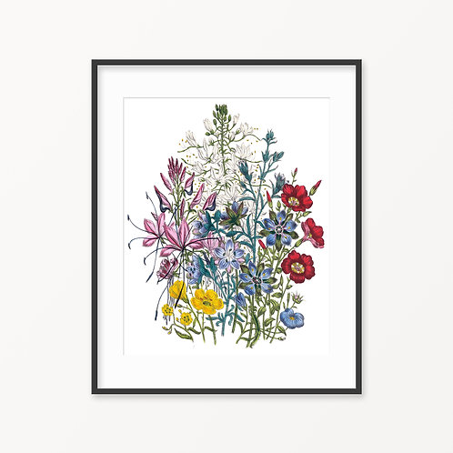 Vintage Botanical Print - 69