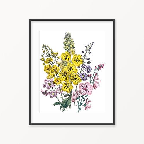 Vintage Botanical Print - 178