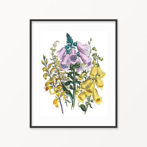 Vintage Botanical Print - 179