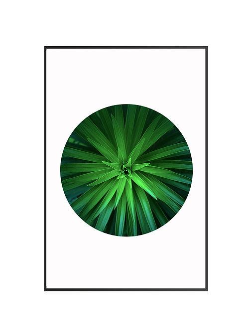 Tropical Green Plant M27