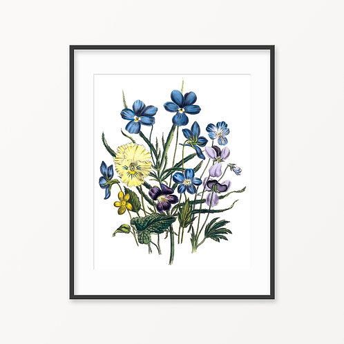 Vintage Botanical Print - 120