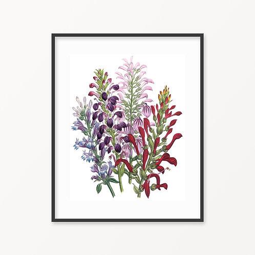 Vintage Botanical Print - 163