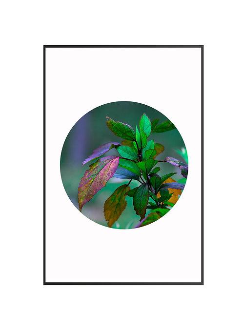 Artistic Leaves Circle Print M17