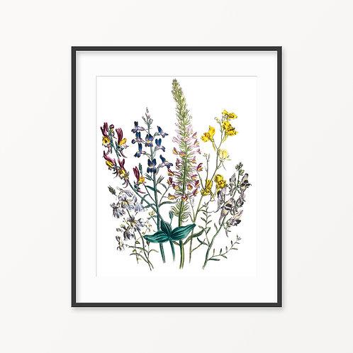Vintage Botanical Print - 96