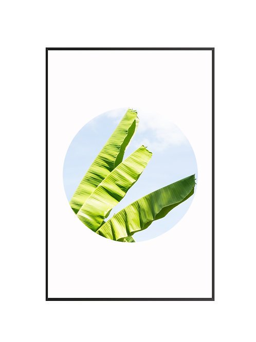 Banana Leaves M4