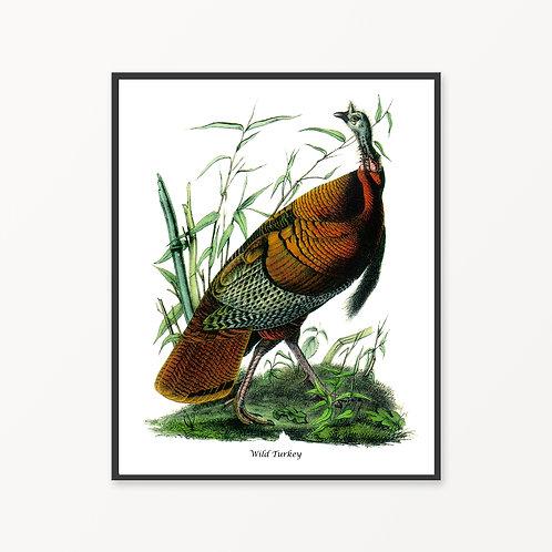 Wild Turkey Hand Drawn illustration