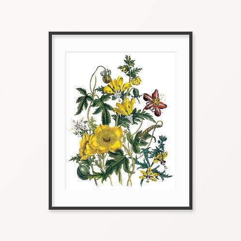 Vintage Botanical Print - 64
