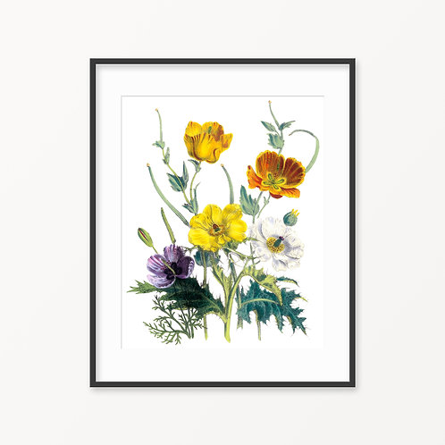 Vintage Botanical Print - 59