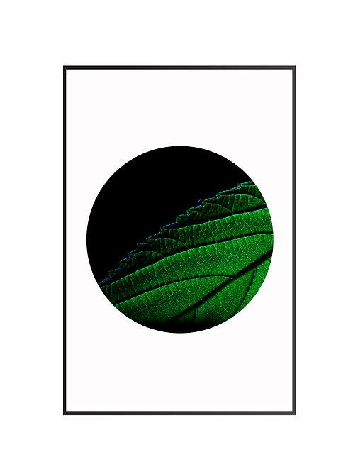 Green Leaf on Dark Background M38