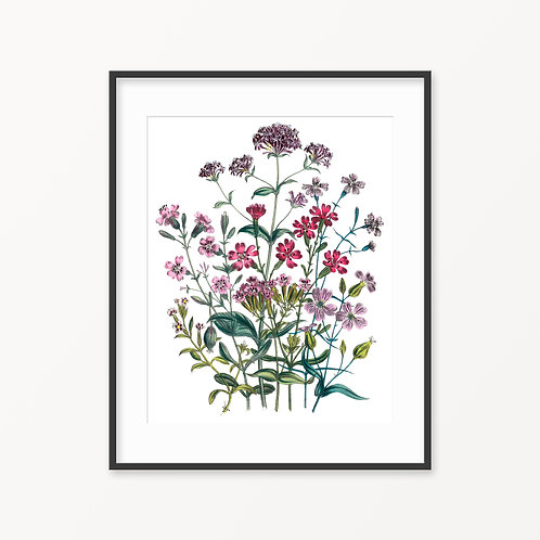 Vintage Botanical Print - 72