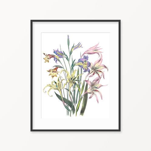 Vintage Botanical Print - 10