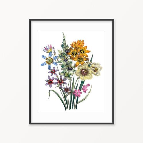 Vintage Botanical Print - 18