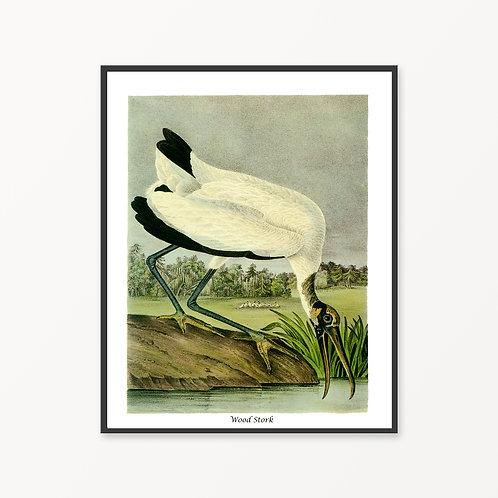 Wood Stork Hand Drawn illustration