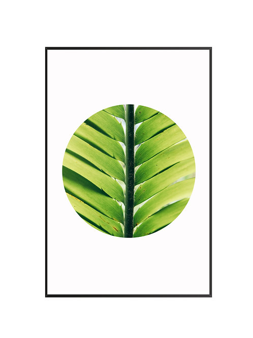 Green Plant Leaves M11