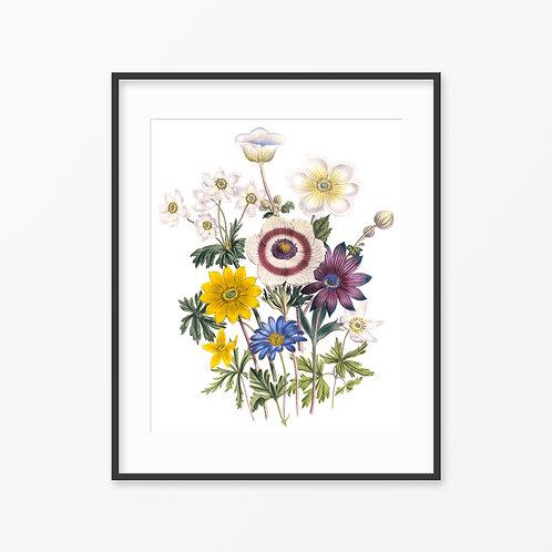Vintage Botanical Print - 103