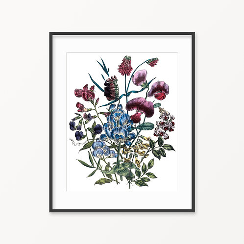 Vintage Botanical Print - 136